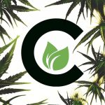 cultivate cannabis